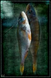 Рыбки на проводе