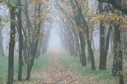 Парк  Володимир Худолій
