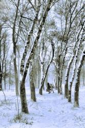Ростислав Швец Зимнее Утро