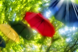 Рилеєв Сонячні парасольки
